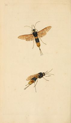 v.6 (1797) - The natural history of British insects : - Biodiversity Heritage Library