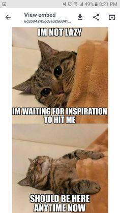 Sad Cat Meme, Cute Cat Memes, Cute Animal Memes, Funny Animal Quotes, Animal Jokes, Funny Animal Pictures, Cute Funny Animals, Cute Baby Animals, Funny Cats