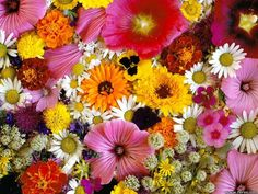 blomster | flowers for flower lovers.: Beautiful flowers wallpapers.