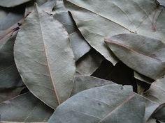 Herb Recipes, Medicinal Herbs, Superfoods, Good To Know, Natural Remedies, Herbalism, Plant Leaves, Medicine, Healing