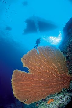 Dive Traveler COO, Dave White, exploring Bougainville Reef off Queensland, Australia.