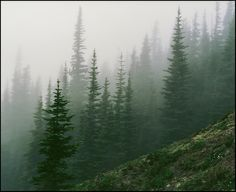 Misty firs - Olympic Mountains, Washington by Trevor Ducken Pacific Northwest Style, Northwest Usa, Olympic Mountains, Rocky Mountains, Wanderlust, Adventure Is Out There, Art Plastique, North West, Beautiful World