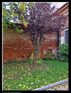 Autumn by Giancarlo Gallo