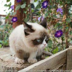 What a cutie :)Grumpy Cat photo #GrumpyCat