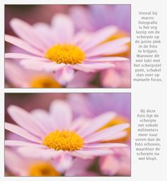 Scherpstellen bij macrofotografie van bloemen Photoshop, Tips, Plants, Photography, Pictures, Photograph, Fotografie, Photoshoot, Plant