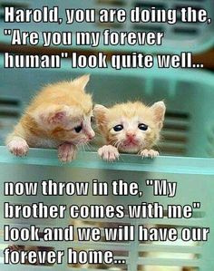 Please spay or neuter too many homeless healthy precious babies willl never get a home!