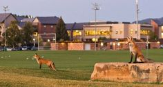 colorado state university campus - Google Search