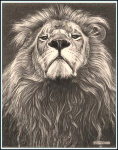 Head of the Family' - Lion