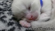 Ragdoll Cattery, Ragdoll Kittens For Sale, Kitten For Sale, Ragdoll Cats, Daily Pictures, Picture Video, Facebook, Pets, House