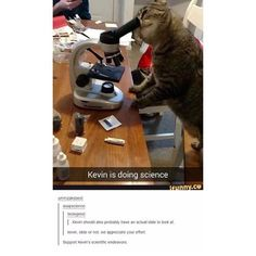 Go Kevin