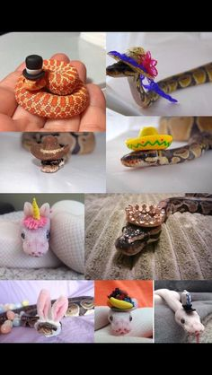 When I'm sad I look up pictures of snakes with hats. It always cheers me up Pretty Snakes, Cool Snakes, Colorful Snakes, Beautiful Snakes, Animals Beautiful, Les Reptiles, Cute Reptiles, Reptiles And Amphibians, Reptiles Preschool
