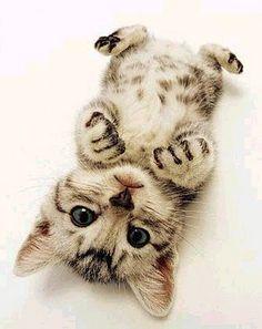 Resultado de imagem para gatinhos bonitinhos