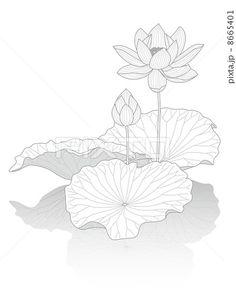 蓮の花 Watercolor Lotus, Lotus Painting, Fabric Painting, Watercolor Paintings, Flower Art Drawing, Lotus Flower Art, Floral Drawing, Colorful Drawings, Art Drawings