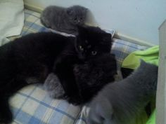 Missy and kids