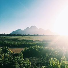 The Cape Winelands is one of the most wine-derful places in the world. Double tap if you agree! Photo by Instagram user @vlinder_socialmedia