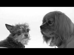 """First Sniff"" - the canine variety. 