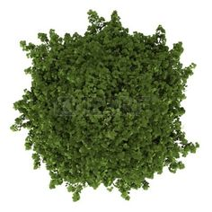 Evergreen Visualization Data