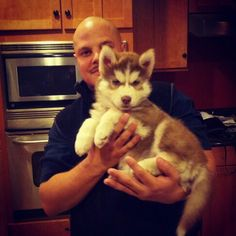 Red white husky pup with blue eyes! 7 weeks old! Cutest puppy ever!!!!