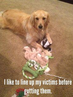 Sounds like a retriever!!
