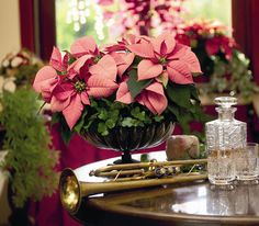 Loving these pink #poinsettia table decorations, used in 3's or used in a larger ornate container #hgtvhomeplants http://hgtvhomeplants.com/know-how/entry/poinsettia-care-instructions.html