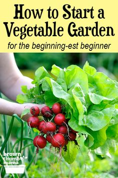 It's easy to start your first vegetable garden, even if you've never planted a seed before. Learn everything you need to know to grow your own veg! Growing Cherry Tomatoes, Growing Tomatoes In Containers, Growing Veggies, Planting Vegetables, Organic Vegetables, Growing Plants, Starting A Vegetable Garden, Vegetable Garden For Beginners, Home Vegetable Garden