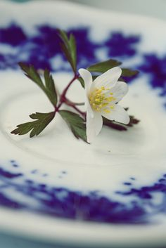 white blossom and delft blue plate for my kitchen...then the plate collection will be done!