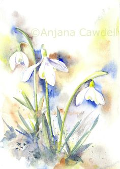 https://www.flickr.com/photos/37950499@N05/shares/0PA1P9 | Anjana Cawdell's photos