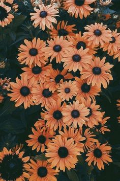 Flowers yellow wallpaper iphone ideas i wallpaper, aesthetic iphone wallpaper, Cute Backgrounds, Cute Wallpapers, Wallpaper Backgrounds, Flower Wallpapers For Iphone, Vintage Flower Backgrounds, Floral Wallpapers, Phone Backgrounds, Tumblr Wallpaper, Screen Wallpaper
