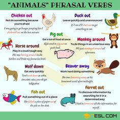 Animals Phrasal Verbs