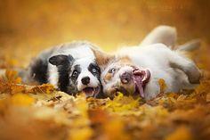 Fotógrafa captura retratos de cães em um 'mundo fantástico' | Estilo