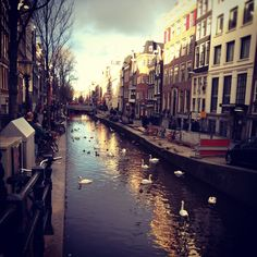 Amsterdam at the canels
