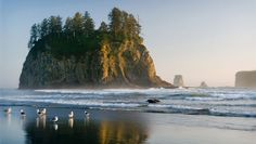 Olympic Peninsula - I would LOVE to go here and I will one day!