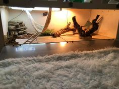 The ideal enclosure size for an adult bearded dragon is x x which is about 120 gallon. Bearded Dragon Enclosure, Bearded Dragon Cage, Window Ventilation, Large Terrarium, Glass Cages, Baby Dragon, Pet Shop, Habitats, Dragons