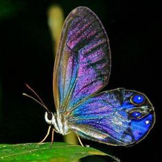 GORGEOUS blue butterfly! It reminds me of Morpheus from Splintered!