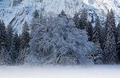 White tree in Yosemite by hirojifukui, via Flickr