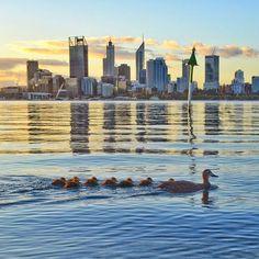 """In Australia vacanze """"formato famiglia"""". #Australia #duck #anatre #Perth #crociera"""