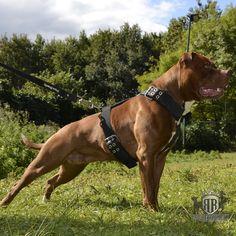 939aa464587302f7dd99b72fa2aeecf7 dog harness beautiful dogs 23 best dog harnesses images dog harness, dog stuff, dog leash