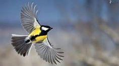 Vögel - Yahoo Suche Bildsuchergebnisse