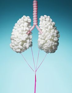 Pneumatic Anatomy, Tied Balloons Made In Shape of the Human Respiratory & Digestive Systems