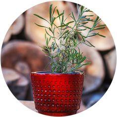 lavanda Ikebana, Aloe, Strawberry, Food And Drink, Home And Garden, Fruit, Floral, Flowers, Garden Ideas