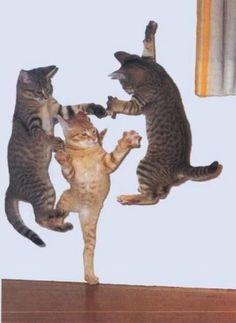 kitten happy dance
