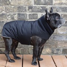 Waterproof Insulated Boys French Bulldog Pug Winter Jacket Coat - Blac – Babies & Beasts