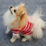 Cool Doggie Stripe Polo T-Shirt