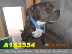 On the PRELIMINARY euthanasia list for 5-10-14. ALL HOLDS must be submitted by 5:30am on 5-10-14.  ID#A153554 Status: STRAY WAIT Unpredictable  Due Out Date: 04/07/2014 I am a female, blue and white Pit Bull Terrier.  The shelter staff think I am about 5 years old.  I have been at the shelter since Apr 02, 2014.