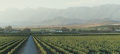Wine Regions of South Africa South Africa, Cape, Vineyard, Outdoor, Mantle, Outdoors, Cabo, Vine Yard, Vineyard Vines