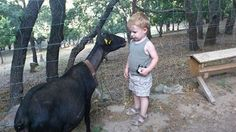 La mayor parte de las veces la curiosidad hace que los niños se acerquen a los animales sin temor alguno. No sabemos porqué, pero en estas situaciones siempre nos sorprende la atención, el cuidado y la paciencia infinita que los animales demuestran. De este hacer recibimos una buena lección de la mano del pequeño Eric que visitó nuestra granja este fin de semana. Disfrutamos muchísimo, gracias por compartir la foto!