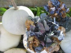 52 FLEA: Faded Blue Hydrangea