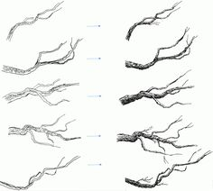 Learn to draw tree branches and twigs with this easy Pen and ink drawing tutorial. Tree Drawings Pencil, Ink Pen Drawings, Realistic Drawings, Art Drawings Sketches, Easy Drawings, Drawings Of Trees, Tree Pencil Sketch, Drawing Designs, Branch Drawing