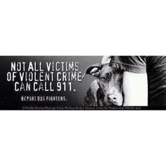 PIT BULLS  If you see a Pit Bull being leaded into dog fighting or bait! Call 911 immediately!