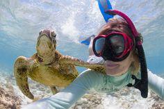 Swim with turtles - Lady Elliot Island, Queensland, Australia